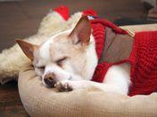 Sammy's nap