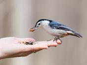 Feeding the Birds at RBG