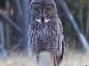 """The Sc-owl"""