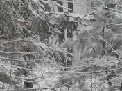 snow picture. jonestown pa. from Jolene Zidik