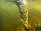 Beaver Pond Whirlpool