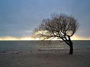 The Iconic Tree