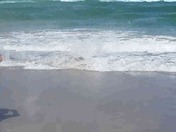 fisherman saves spinner shark at Jupiter Beach today