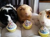 The 3 little piggies.....MooMoo GiGi