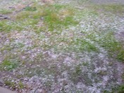 Hail Storm Lincoln County Mississippi