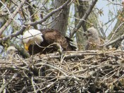 Gray's Lake's Eagles 4-15-16