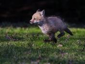 Run Little one, run!