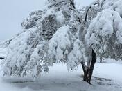 Winter Wonderland?