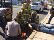Duckings Rescued from Storm Drain