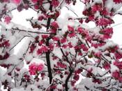 Spring in Los Alamos, sort of.