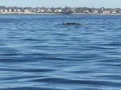 Kayaking with Right whale off Nahant