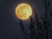 Pink Moon 4/21/16 b
