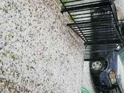 Lake Wildwood hail