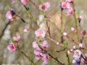 Spring Flowers in Windsor