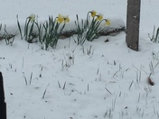 Where is spring????