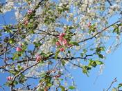 Blossom Splendor