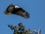 The Eagle Has Un-Landed