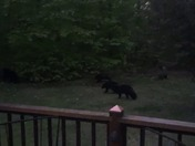 Bears in Meredith