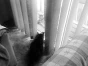 MiMi the cat has a visitor