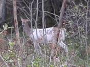 Unique deer!