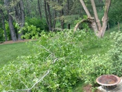 Wind Damage - Hanover, NH