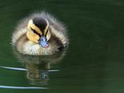 Floating Fluff