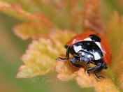 Lady Bug......