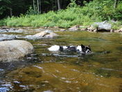 Swimming upstream in the Bearcamp river in North Sandwich
