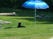 Our dog Omega Mae