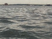 Rays in the inner harbor