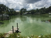 Toxic algae in Palm City