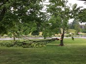 Tree down on Gunpowder, Florence Ky
