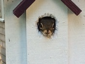 Little squirrel finds new digs
