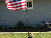 All American doggie