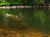Underwater Debre Oxtongue River