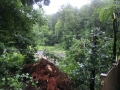 Trees down on Silas