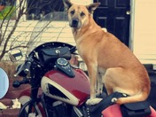 Scooby doo says,...ready to ride!...bring on the warm weather :-)