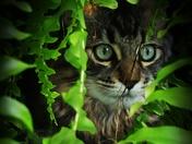 Jungle kitten