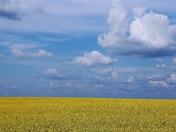 pride of the prairie