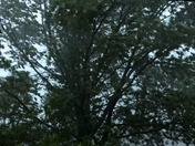 Severe Weather in Pella, IA