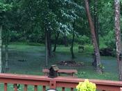 Lotsa rain in a short time