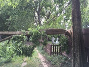 Storm Damage in Hude Park