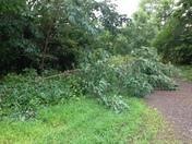Tree in Driveway in Hackett, AR 7/14/16