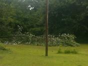 Tree split in half  in my backyard