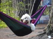 Our furry friends even enjoy camping and relaxing at Rollins Pond Campground