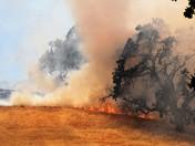 vacaville grassfire