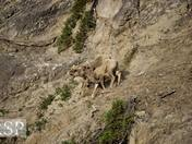 Lovely Little Lambs