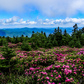 Rhododendron Gardens National Recreation Trail