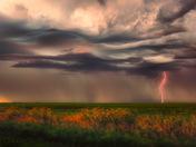 Prairie Plasma