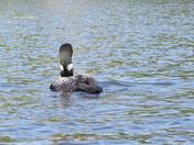 Swain Lake Barrington NH